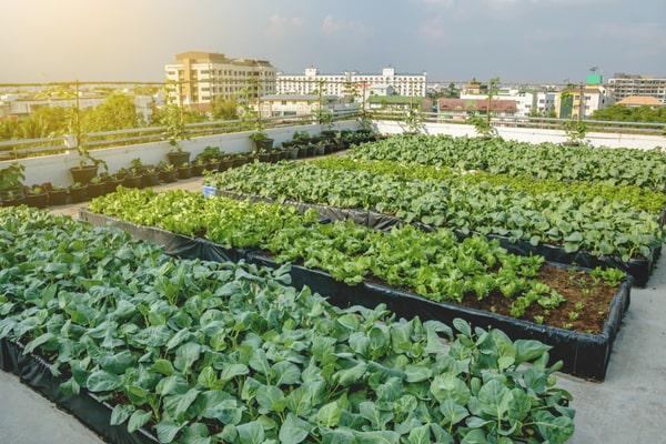 agriculture dans la ville