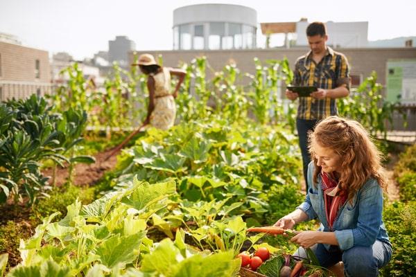 Agriculture urbaine et cohésion sociale