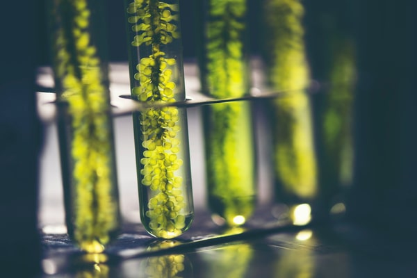 biocaburants aujourd'hui et demain